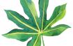 热带雨林绿色植物香蕉树叶子包装印刷背景图案手机壳PNG图片素材