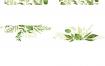 80款文艺清新水彩绿色叶子橄榄叶海报banner背景图案png免抠图片素材